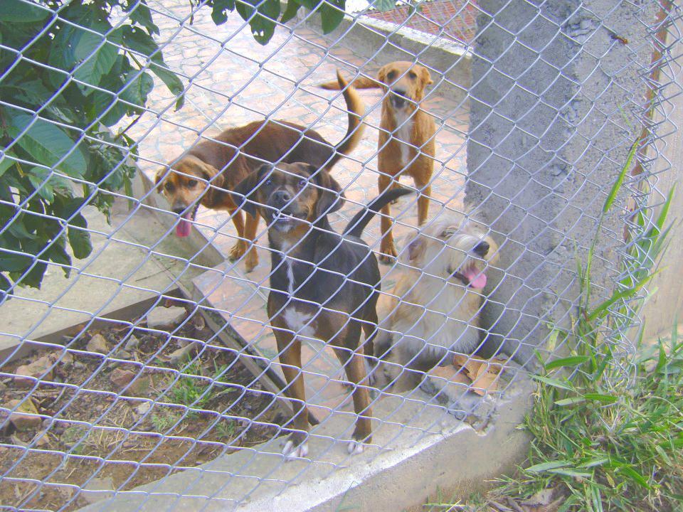 Animais 'internados' da sede da União Protetora a espera de adoção (Arquivo Atos)
