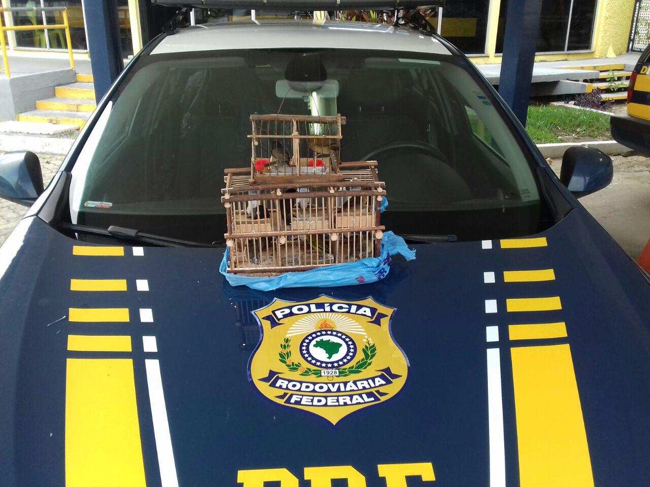 Apreensão de pássaros traficados em operação da Polícia Federal nesta segunda-feira (Divulgação / PRF Lavrinhas)