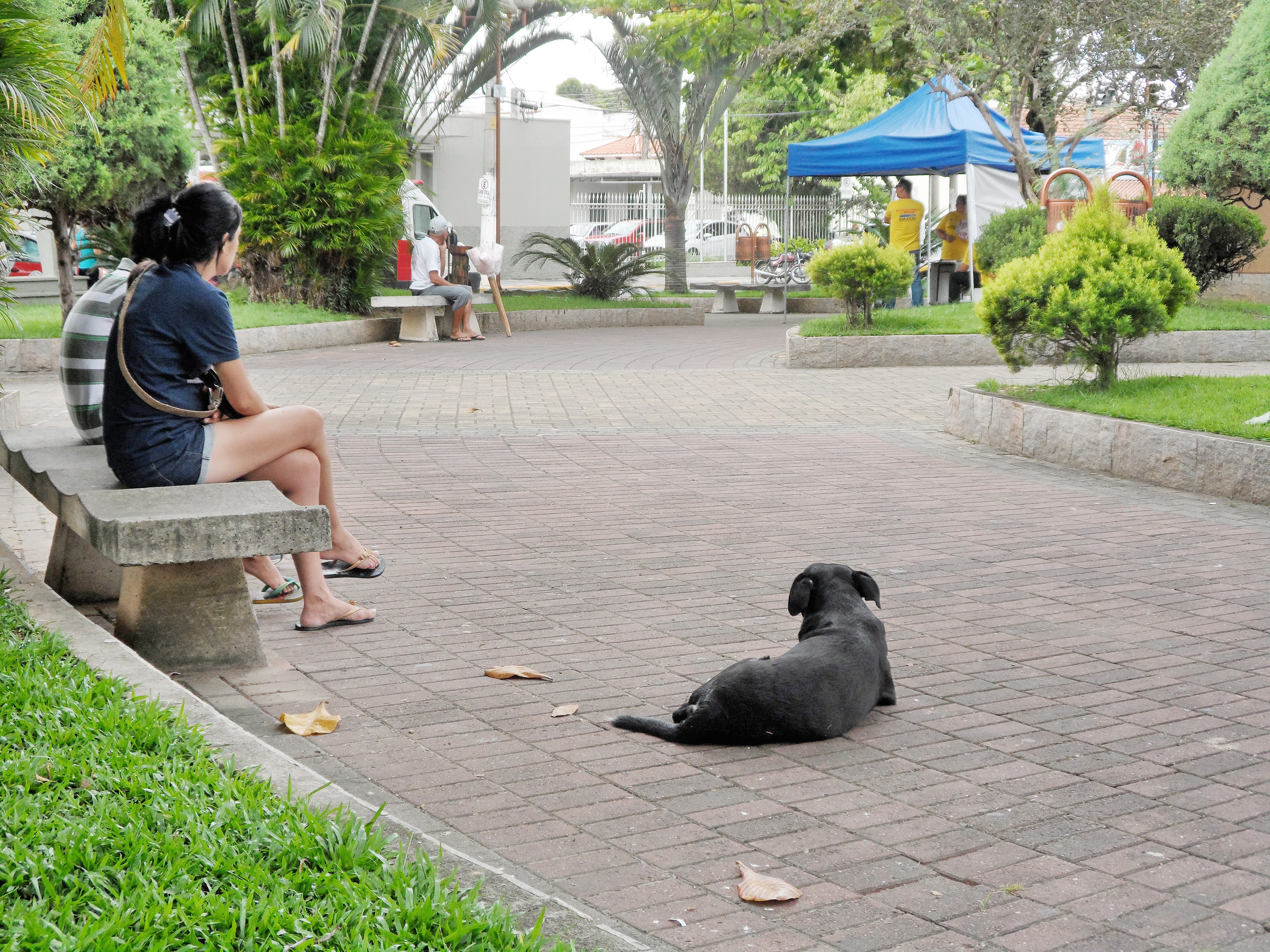 Moradores descansam na praça 9 de Julho, acompanhada por cão de rua; animais devem ter novo centro (Foto: Maria Fernanda Rezende)