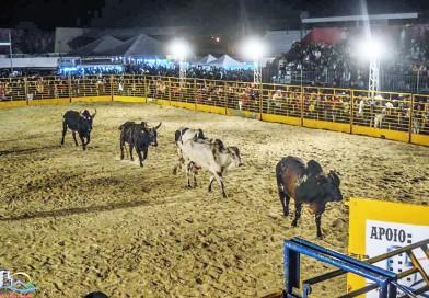 Novo projeto de lei para proteção aos animais espera votação em Cachoeira