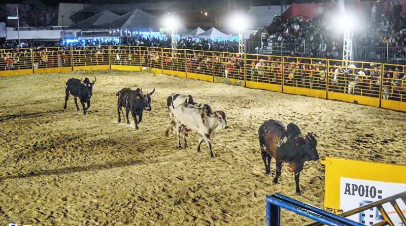 Animais utilizados no rodeio da Festa do Peão, encerrada no último domingo; nova lei gera polêmica após acusação de respaldo de prefeito (Foto: Reprodução)