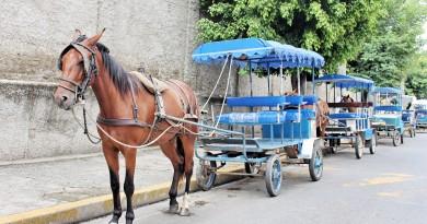 Charretes esperam por movimento em área central de Aparecida; grupo cobra implantação de lei e rigor para atuação de profissionais (Foto: Juliana Aguilera)
