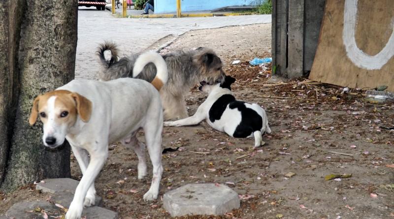 Cachorros na rua preocupam; cidade aprovou Fundo Municipal do Meio Ambiente e Bem-Estar Animal (Foto: Arquivo Atos)