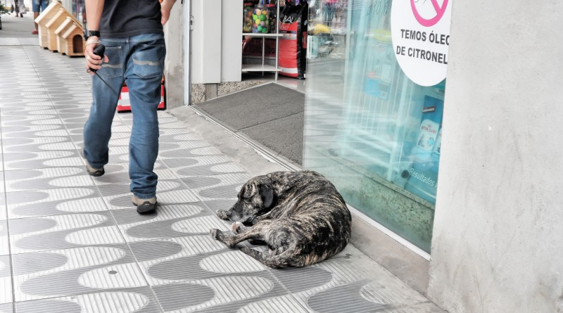 Cachorro dorme em calçada no Centro de Pinda; Prefeitura assina convênio para castrações de animais (Foto: Arquivo Atos)