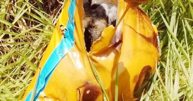 Saco que escondia o corpo de cão encontrado morto em Lorena (Foto: Reprodução)