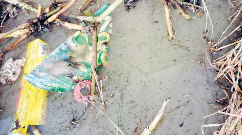 Flagrante do acúmulo de larvas em terreno baldio; cidades reforçam ações de combate contra mosquito (Foto: Arquivo Atos)