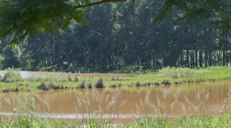Parque ecológico do Taboão
