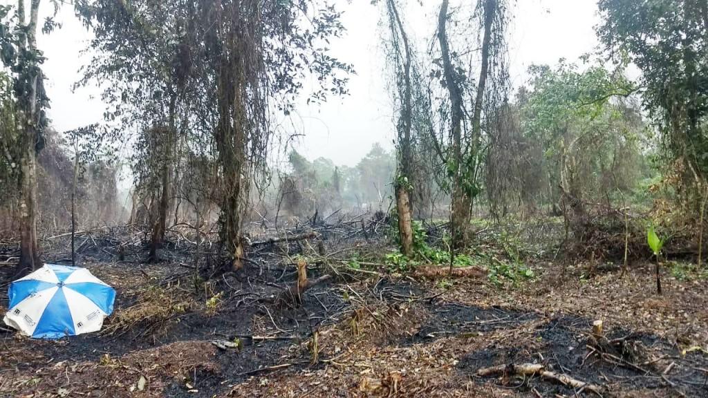 Área atingida por queimada em Ubatuba; Polícia Ambiental reforça atenção para evitar novos casos (Foto: Divulgação Polícia Ambiental)