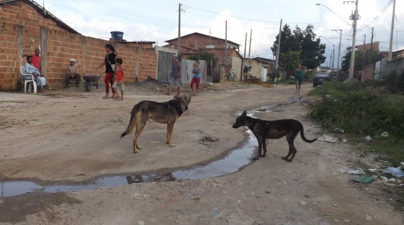 Parque das Rodovias área invadida (24)