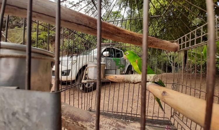 Ave encontrada durante operação da Polícia Ambiental que também apreendeu munições e armas de fogo (Foto: Reprodução PM)