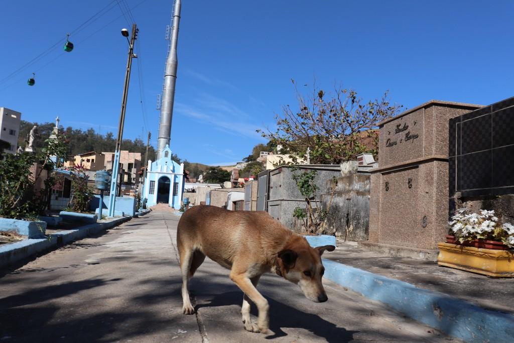 Cachorro caminha pelo cemitério de Aparecida; cidade passa a contar com lei contra maus-tratos (Foto: Marcelo A. dos Santos)