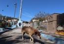 Aparecida aprova lei que estabelece multa de R$ 1,1 mil para maus-tratos de animais