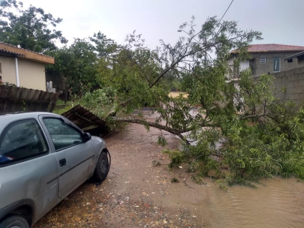 Fortes chuvas também registraram quedas de árvores em Guaratinguetá; bairros sofrem com alagamentos (Foto: Divulgação PMG)