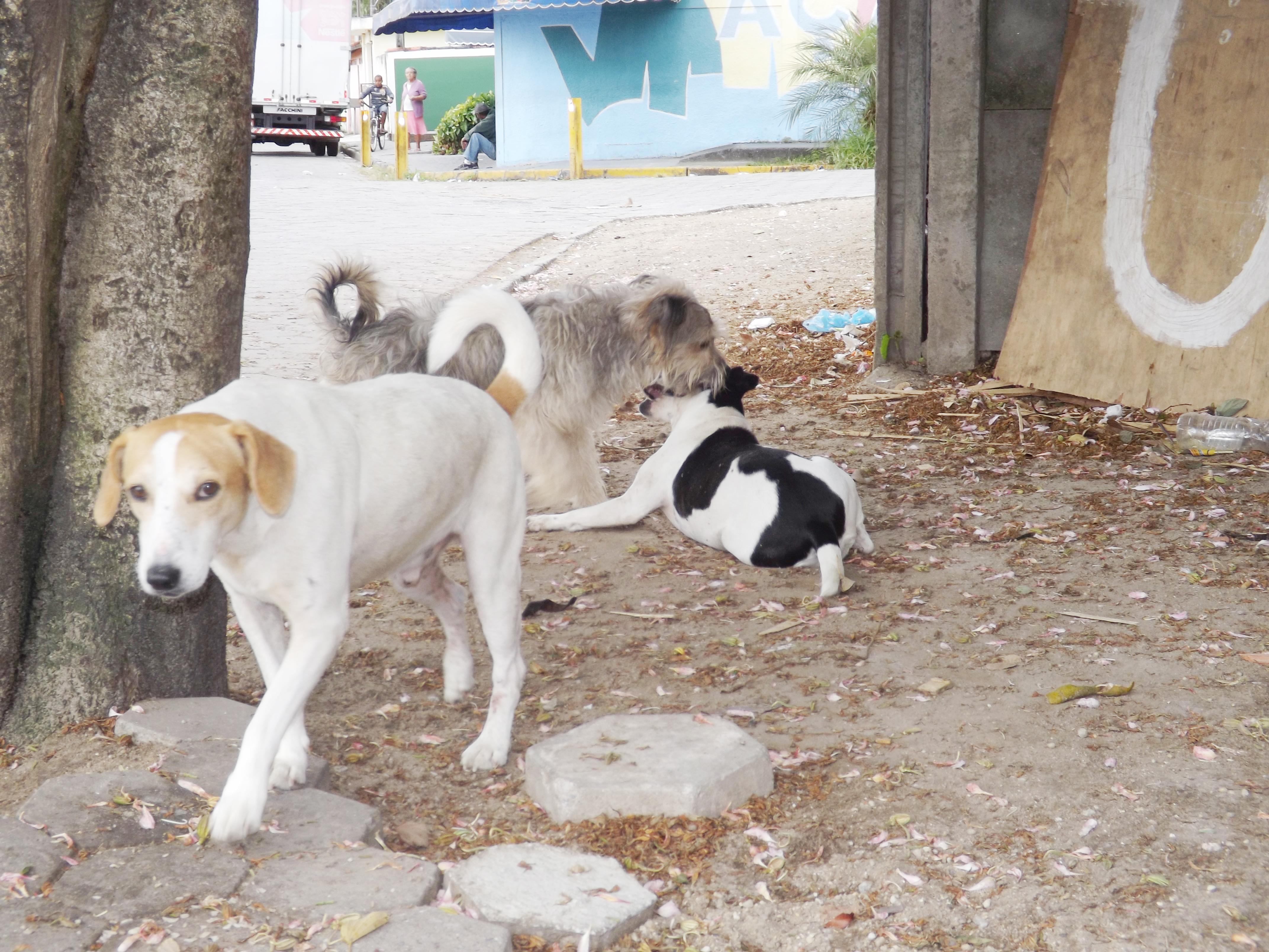 Auxilio animal Cruzeiro