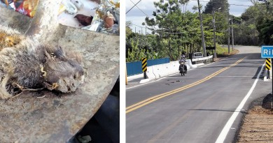 Trecho da BR 459, próximo a campus da USP, em Lorena, área em que segundo macaco foi encontrado na cidade, em uma única semana; acima, o primeiro primata descoberto (Fotos: Reprodução e Lucas Barbosa)