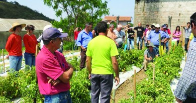 Trabalho de produtores rurais com alimentos orgânicos em Pindamonhangaba; setor debate criação de cooperação para ampliar acesso na cidade (Divulgação)