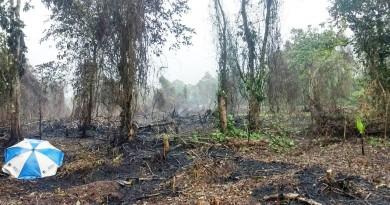 Depois de incêndio criminoso, Ubatuba reforça segurança em áreas de preservação