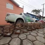 Caçador de aves silvestres é detido com armas de fogo em Lagoinha