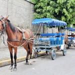 Aparecida extingue serviço de charrete turística a partir de janeiro