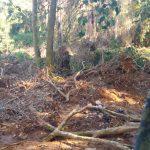 Área de preservação é alvo de desmatamento em Ubatuba
