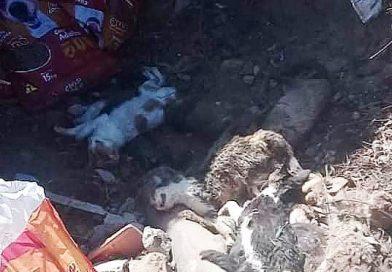 Polícia investiga mortes de 34 gatos encontrados em Cachoeira