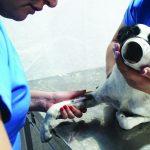 Lorena retoma programa de castração de cães e gatos